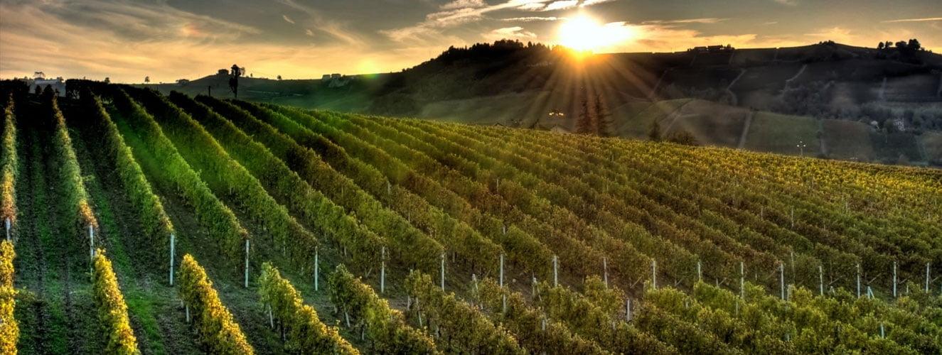 droit de la vigne